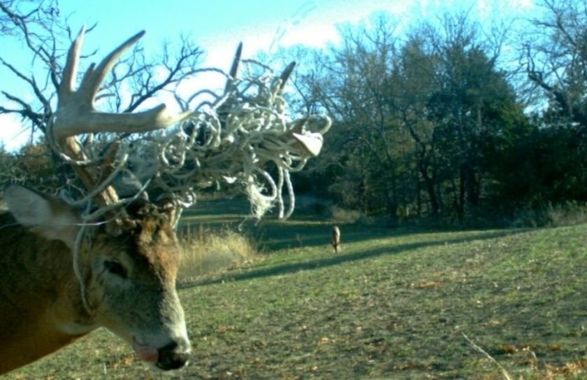 Hunting a Food Plot - Whitetails By Design TV Ep 02 ...