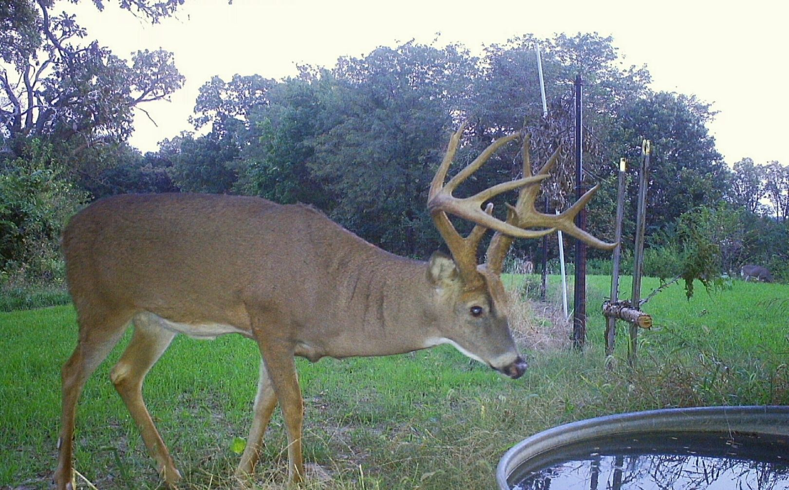 water for deer parcels whitetail habitat solutions