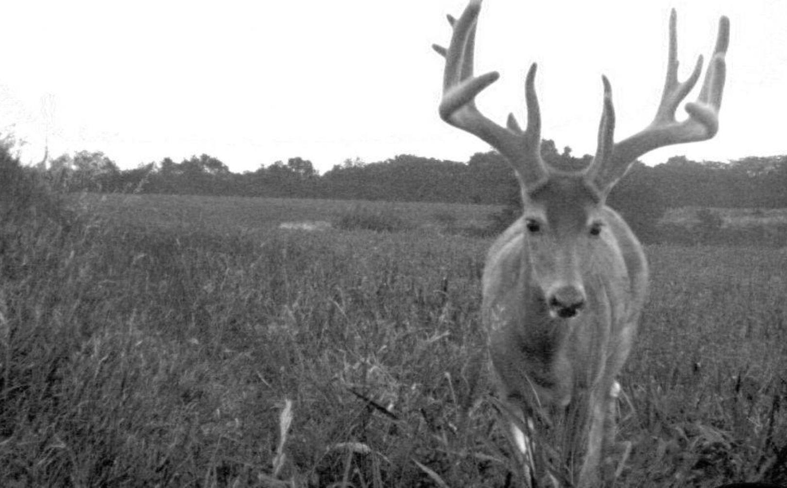 scout for mature bucks