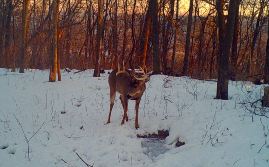 trail cam dependability and battery life