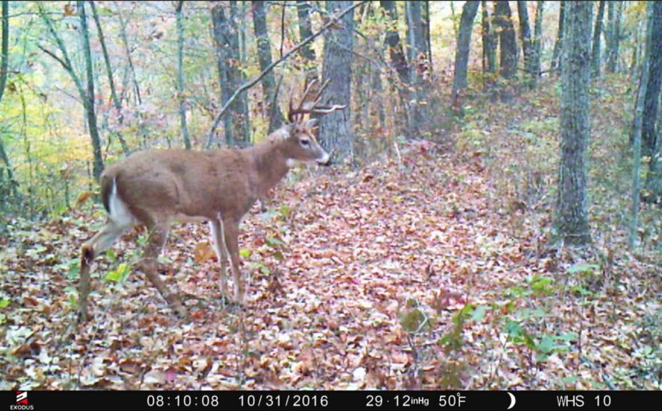 whitetail rut tactics