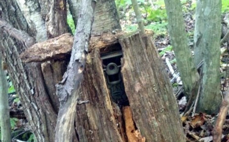 Top Tips To Hide Trail Cams Whitetail Habitat Solutions
