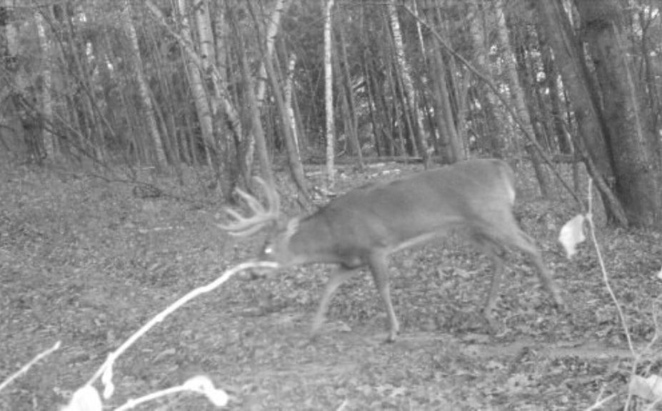 Bow Season Bucks Rain