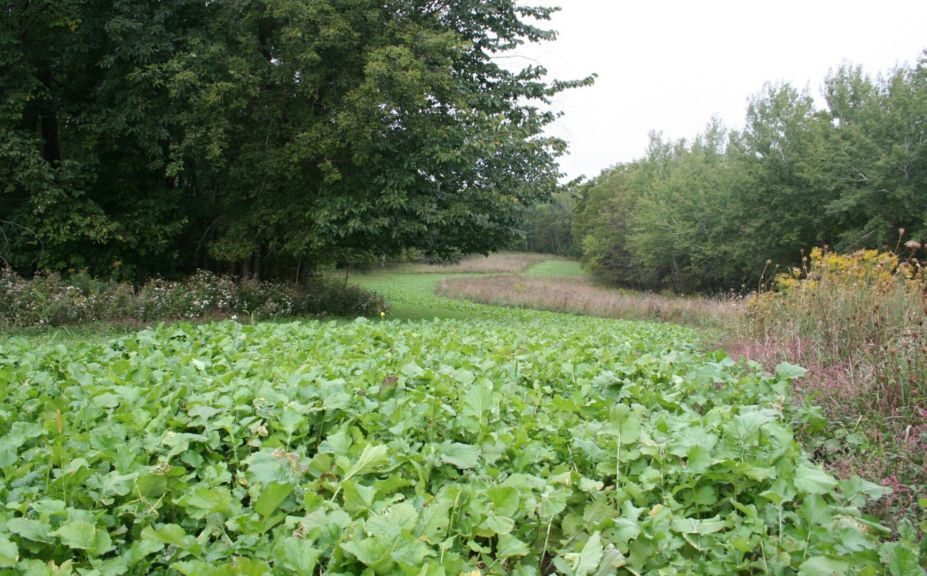 no till food plot