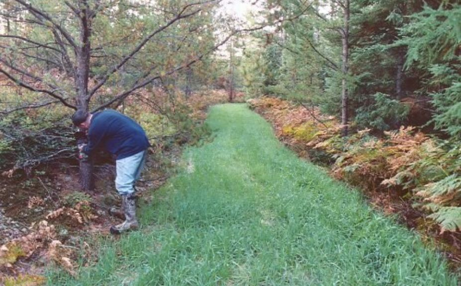 How Many Acres Of Food Plot Should I Plant Whitetail