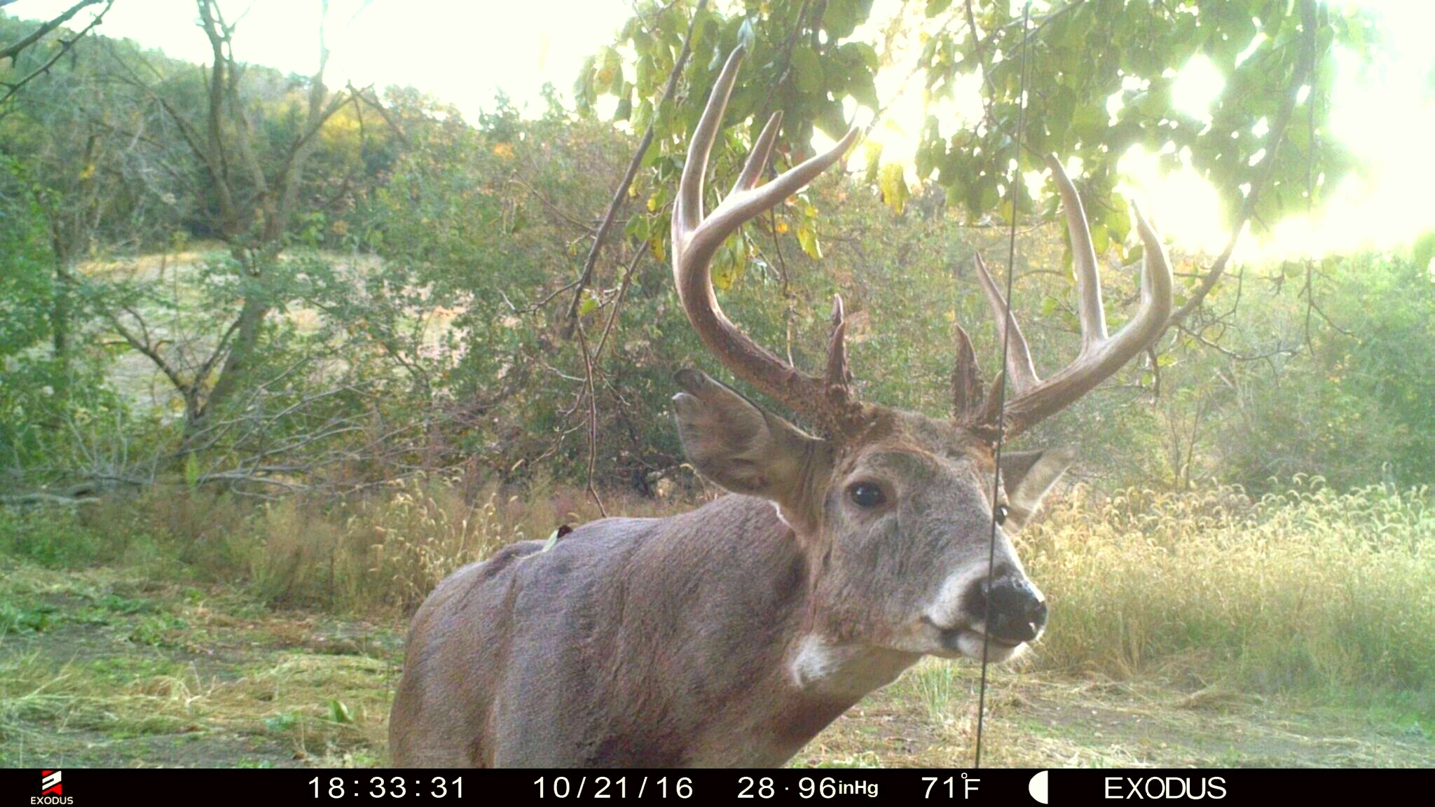 92bc10f6ee0c2 Morning, Mid-Day And Evening Buck Hunting Strategy | Whitetail Habitat  Solutions