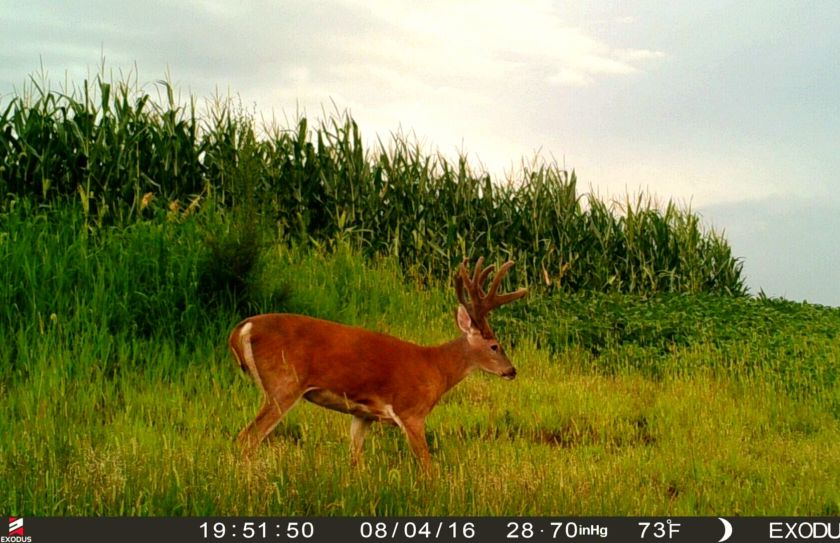 hide food plots