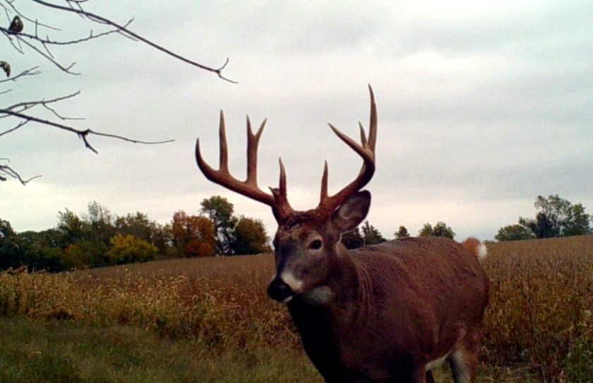 rut started yet