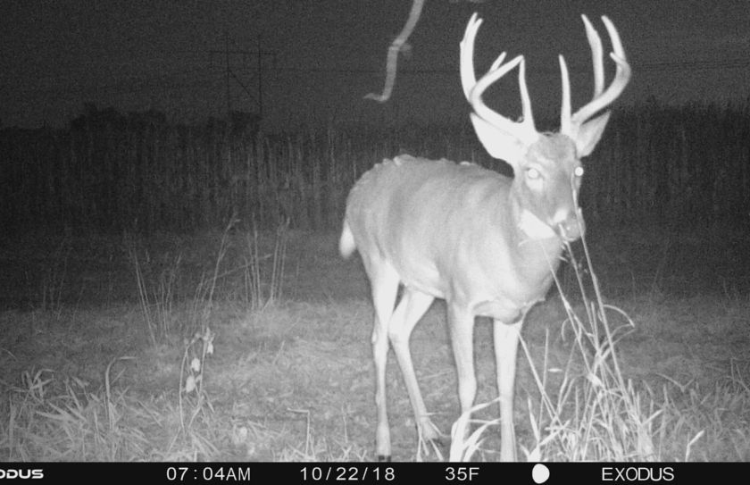 whitetail rut hunting
