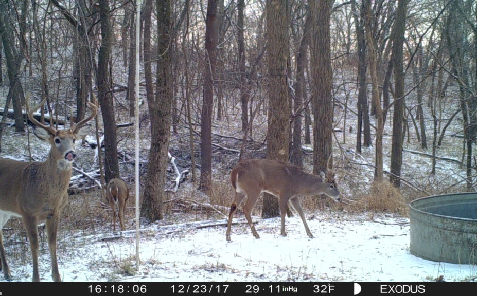 2018 whitetail rut forecast