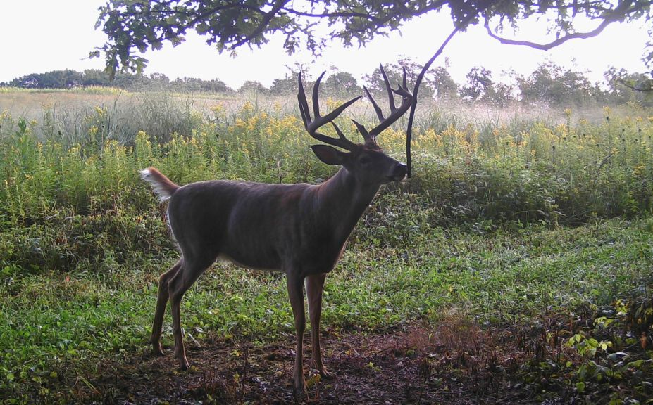 How To Hunt Whitetails In The Wind | Whitetail Habitat Solutions