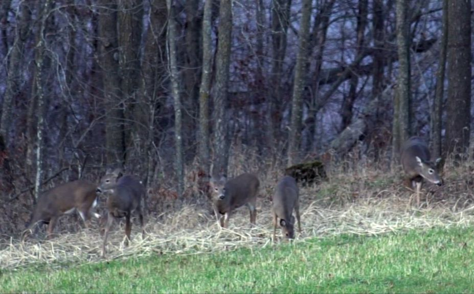 reduce deer numbers